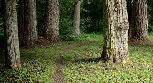 pathinwoods